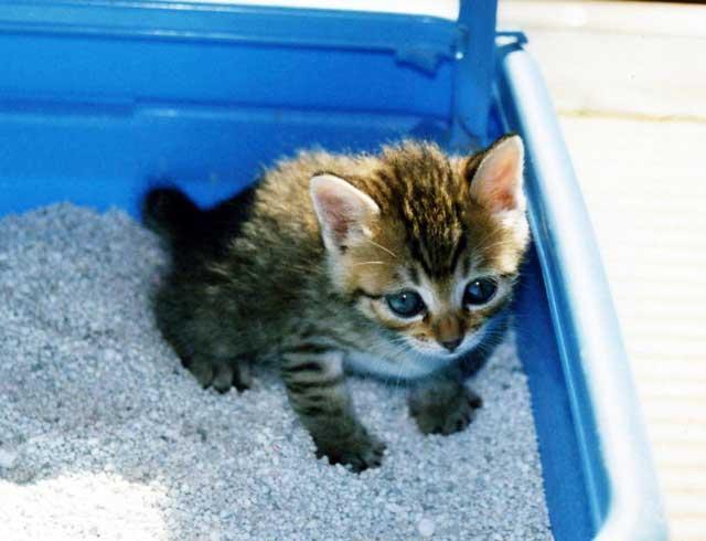 おすすめ 猫 砂